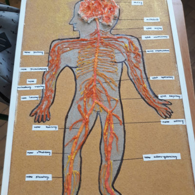 Modele anatomiczne.
